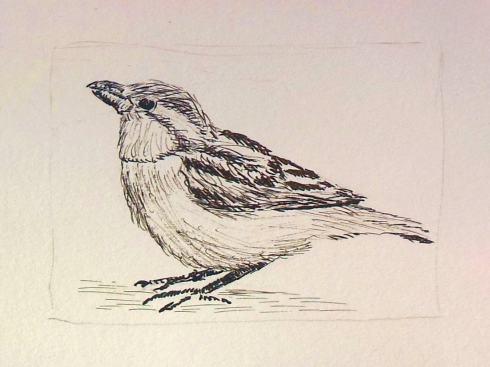 vogeltje in kroontjespen en inkt