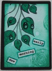 30-4-2016 Morning dew
