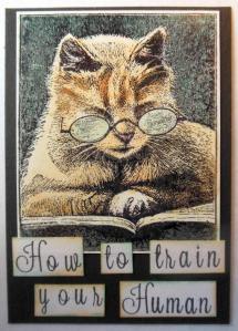 atc-met-stampendous-lezende-kat
